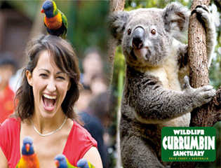 Gold Coast Holiday park is closest to Currumbin Wildlife Sanctuary