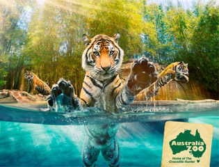 Stay at the Gold Coast Holiday Park when you visit the Australian Zoo